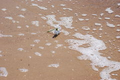 Flowers in the ocean. A daisy swept out  while the tide comes in Stock Photography