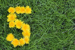 Flowers Of Dandelion In A Shape Of A Five Stock Photos