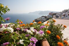 Flowers and Oia, Santorini Stock Images