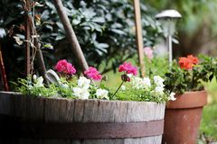 Flowers in old barrels and pots Royalty Free Stock Image