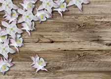 Flowers on old  boarderes Royalty Free Stock Photography