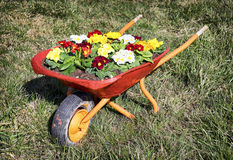 Flowers in an old cart Stock Photography