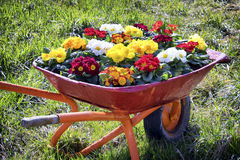 Flowers in an old cart Royalty Free Stock Photos