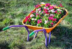 Flowers in an old cart Royalty Free Stock Photography
