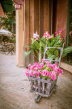 Flowers in an old cart Royalty Free Stock Image
