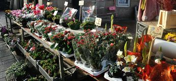 Flowers in an old market Stock Photo