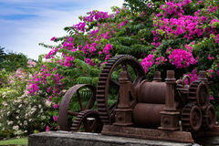 Flowers and old rum estate machinery, Grenada Stock Photo