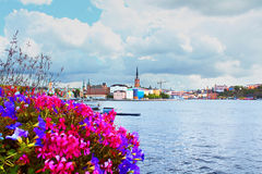 Flowers and the Old Town (Gamla Stan) Royalty Free Stock Image