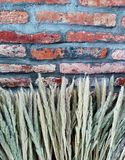 Flowers and old wall. Colors and textures on lod bricks wall Stock Images