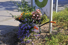 Flowers in an old wheelbarrow. On the sidewalk royalty free stock images