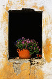 Flowers in old window royalty free stock photo