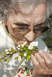 Flowers and old woman -spring Stock Images