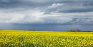 flowers olej w rapeseed polu z niebieskim niebem i chmurami Natura obrazy stock
