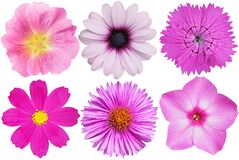 Free Flowers On White Set Pink Flowers Royalty Free Stock Photo - 190879105