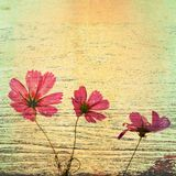 Flowers On Wood Stock Images