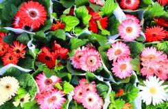 Flowers on the open market. Photo of flowers on the open market in Luxembourg city in the last days of summer. Little gerbera plants in the pots for sales Royalty Free Stock Photography