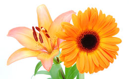 Flowers orange Royalty Free Stock Images