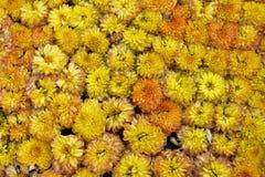 Flowers orange bloom tiny beautiful many Stock Images