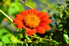 Flowers, orange. Flowers, orange, blurred background, nature of flowers Royalty Free Stock Images