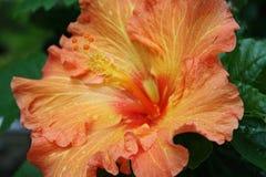 Flowers orange Stock Photos