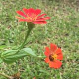 Flowers. Orange and red blooming brightly Royalty Free Stock Photography