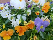 Flowers. Orange, violet, yellow and white flowers Stock Images