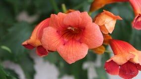 Flowers orangement. Image was shot in jambol stock video