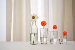 Flowers organized by size. Four flowers organized by decreasing size Stock Images