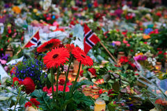 Flowers in Oslo after terror. People left flowers and candles outside the Oslo Domkirke in downtown Oslo after the two terror attacks that hit Norway on 22 July Royalty Free Stock Photo
