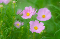 Flowers out of focus Stock Image