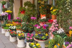 Flowers outside of flower shop. Colorful flowers at the entry to flower shop in Venice Italy. Selective focus royalty free stock photo