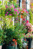 Flowers outside a house Royalty Free Stock Image