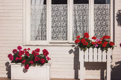 Flowers outside house window. Royalty Free Stock Photo