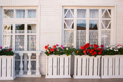 Flowers outside the house. Royalty Free Stock Photos
