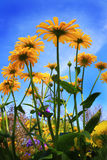 Flowers over blue sky Stock Photo