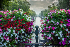 Flowers Over Canal in Amsterdam Stock Image