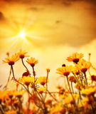 Flowers over warm sunset Royalty Free Stock Photo