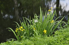 Flowers over water Stock Photos