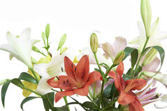 Flowers over white background Royalty Free Stock Image