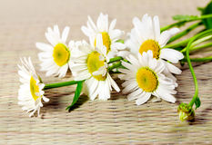 Flowers ox-eye daisy. Flowers camomile; ox-eye daisy on bamboo serviette stock photo