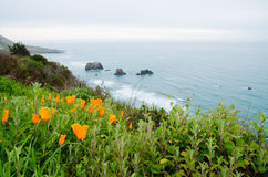 Flowers and Pacific ocean. Spring landscape scenes of the Pacific ocean coast Royalty Free Stock Photography