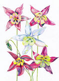 Flowers painted colors. Beautiful flowers painted colors for interior Royalty Free Illustration
