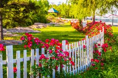 Flowers and paling in park Stock Images