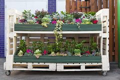 Flowers pallet. Flowers in mobile shelf made from pallet Royalty Free Stock Images