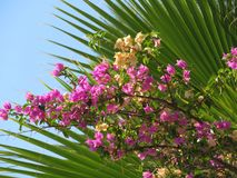 Flowers on a background of palm branches Royalty Free Stock Image