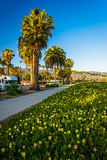 Flowers and palm trees along a bike path in Santa Barbara, Calif Stock Photo