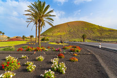 Flowers and palm trees along a road to Yaiza village Stock Image