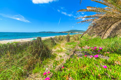 Flowers and palm trees by the sea in Sardinia Stock Photo