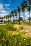 Flowers and palm trees at Shoreline Aquatic Park  Royalty Free Stock Photo