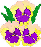 Flowers pansies. Vector illustration floral ornament. Big flowers viola tricolor Stock Photography